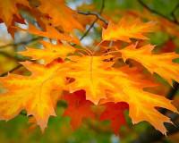 Изображение - Осенние поздравления в стихах s_osenu