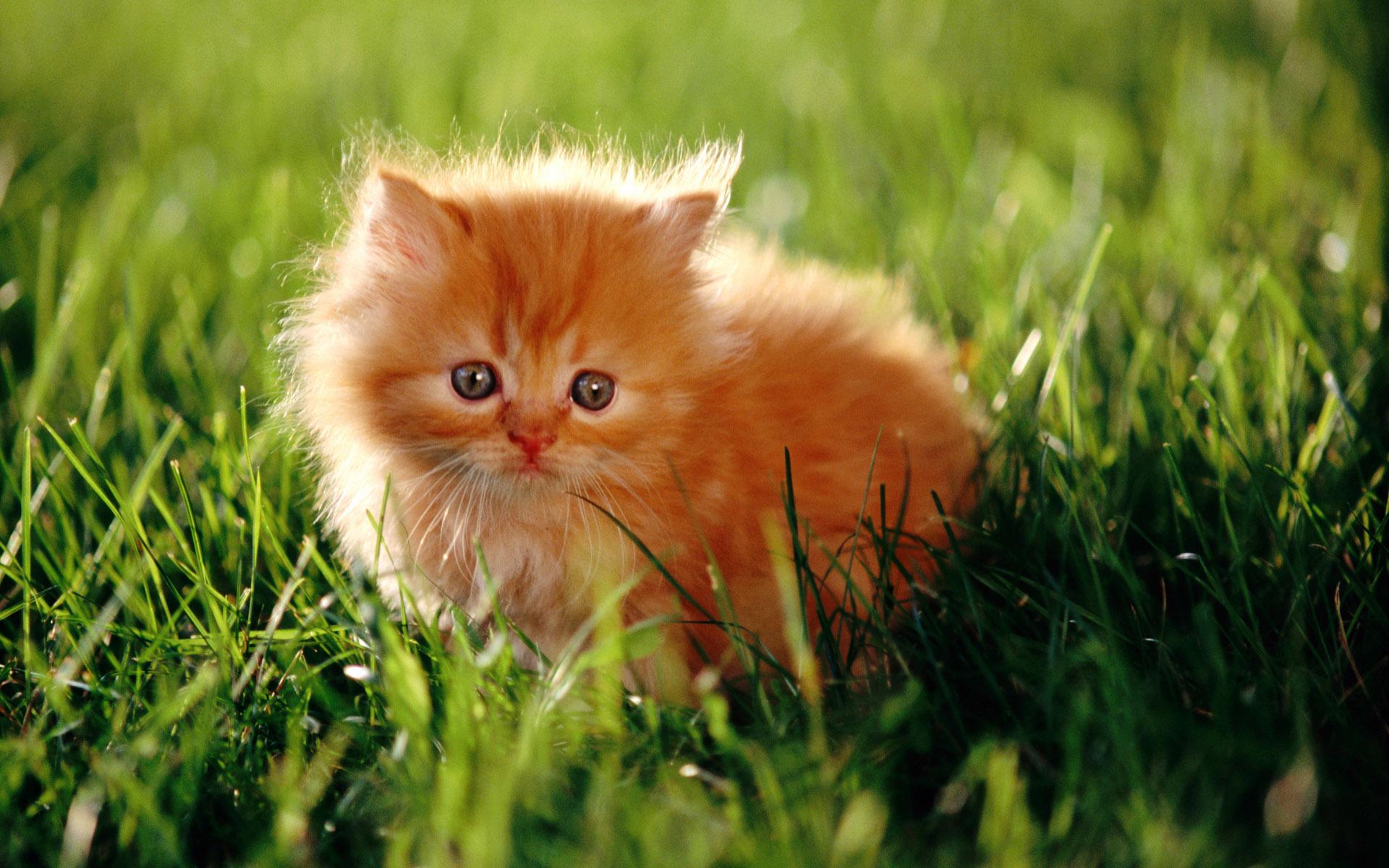 Поздравления подарок котенок фото 57