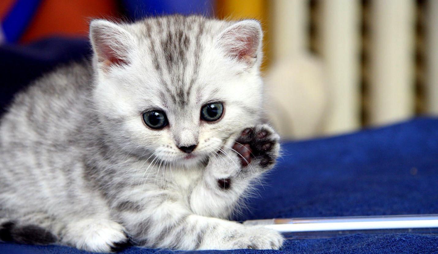Поздравления подарок котенок фото 709