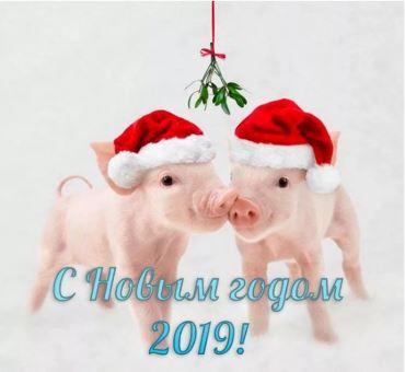 Изображение - Поздравление с новым noviy_god_svini_2019